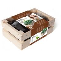 Baza Seeds & Mini Garden Zucchini Bio