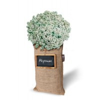 Baza Seeds & Mini Garden Hang Jute kweekzak Alyssum