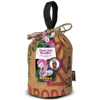 Baza Seeds & Scents Lathyrus Bijou mix