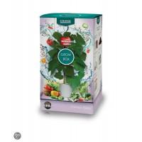 Canna Soil Grow Box Tomato