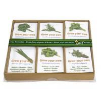 Buzzy complete mini herb garden kit