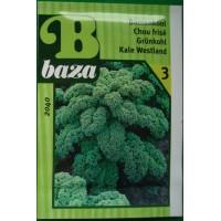 Baza Seeds & Garden Boerenkool Westlandse Herfst