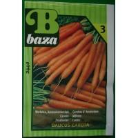 Baza Seeds & Garden Wortelen Amsterdamse Bak