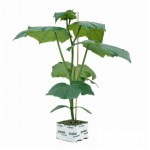 Groente planten