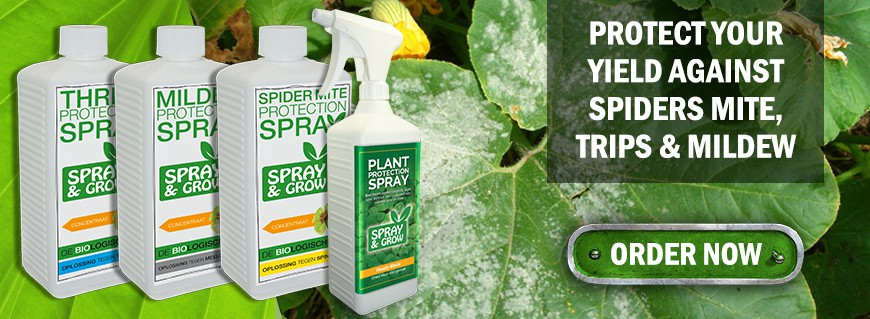 Spray & Grow the perfect suolution for spider mite, trips and mildew.
